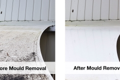 professional-mould-removal