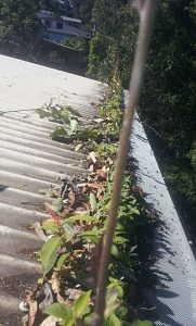 Before cleaning Gutter Guard Buderim