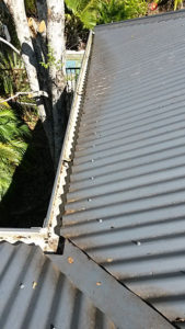 corrugated iron - After gutter cleaning