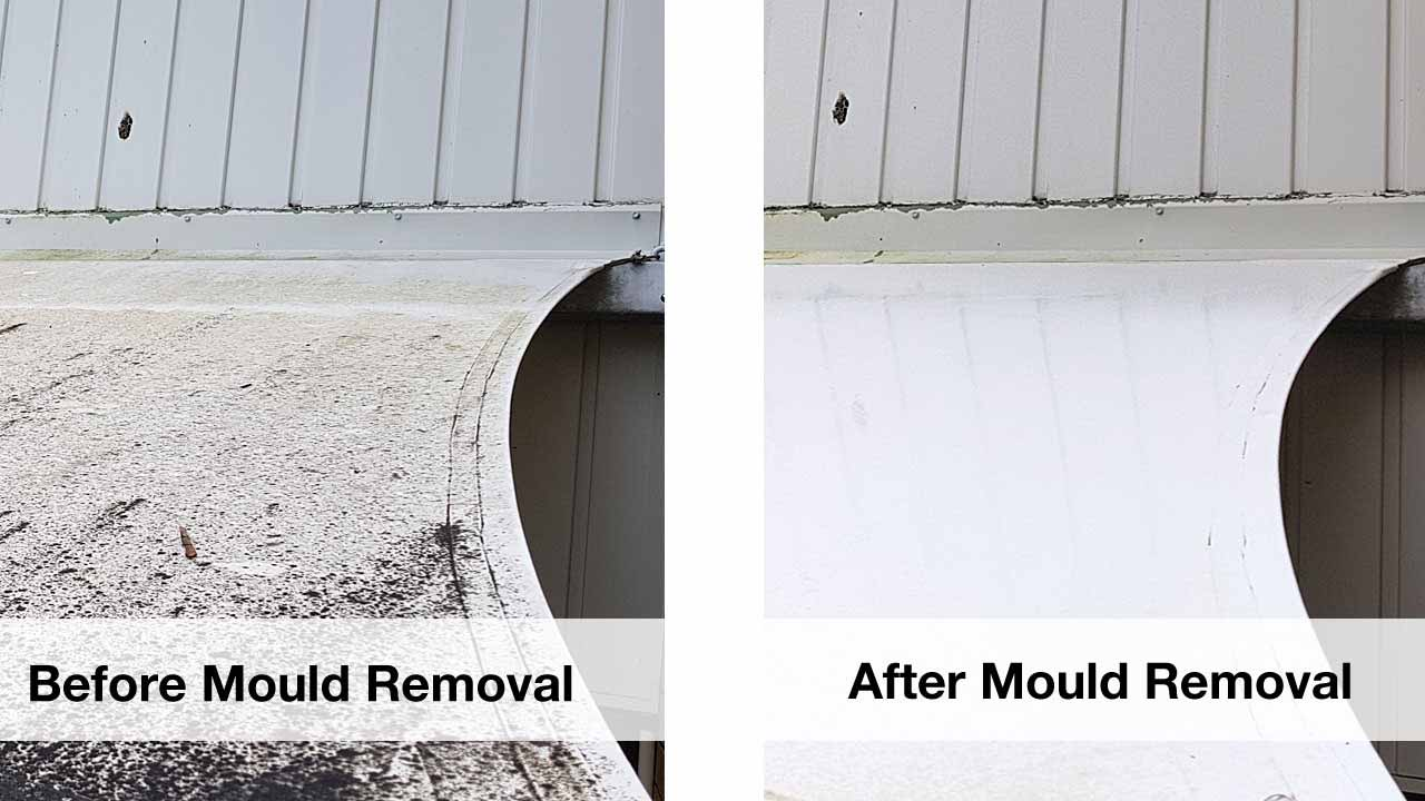 professional mould removal
